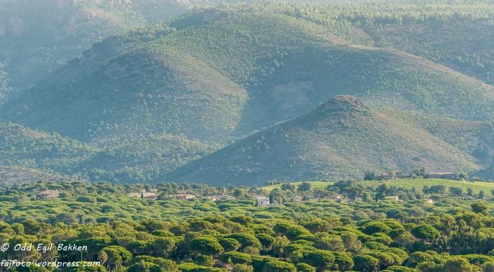 Skog og åser ved Saint-Raphaël.