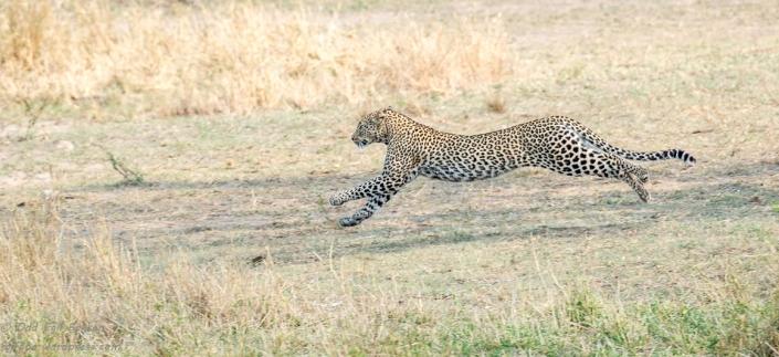 Full fart til tryggheten fra løvene